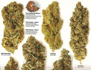 7-High-Times-magazine-april-2009