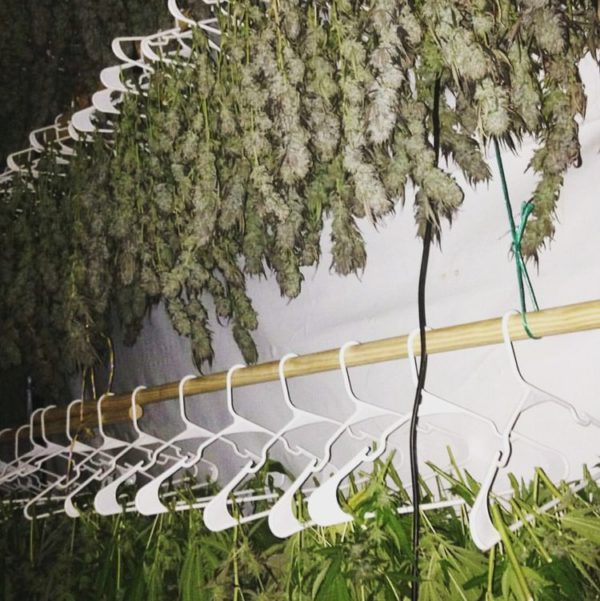 dieseltonic hanging to dry