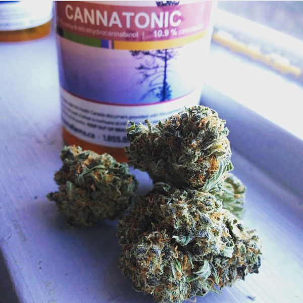 cannatonic from a US dispensary