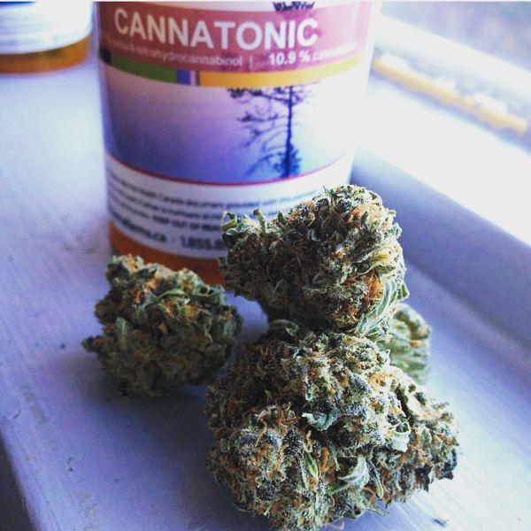 cannatonic from a US dispensary