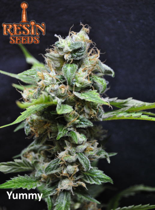 yummy resin seeds